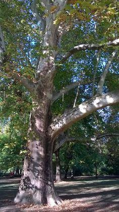 a bölcs fák! :)