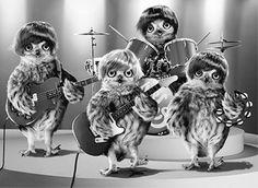 British Owl Band Lenticular Lenticular Motion Birthday Card by Avanti Press picclick.com