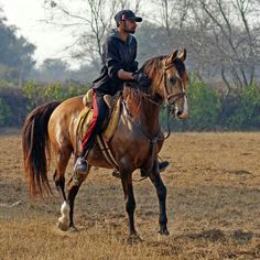 Golden Grace - Horse - Riding - Malwana