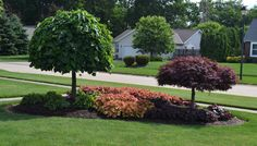 front yard island landscapes | Landscaping idea for an island planting.