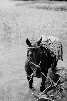 Kesäkuu vuonna 2019 Persona, Horses, Lifestyle, Animals, Animales, Animaux, Animal, Animais, Horse