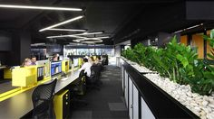 Ellivo Architects fitout, Brisbane office design  |  TRENDING : 1) Use of long florescent lights hanging at different levels. 2) Succulents or low-maintenance plants throughout the work environment.