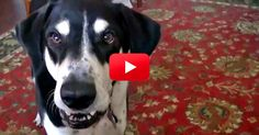This Conversation Between A Dog And His Owner Is Hilarious — And So Accurate! You Have To See it. | The Animal Rescue Site Blog -*SHORT VIDEO* soooo cute!!