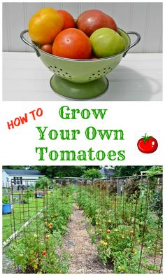 ~How to Grow Your Own Tomatoes | Cottage at the Crossroads~