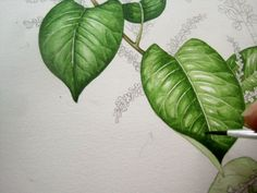 Lizzie Harper watercolour step 6 in painting a leaf