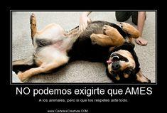 NO podemos exigirte que AMES A los animales, pero si que los respetes ante todo.