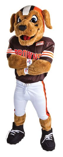 Cleveland Browns mascot - Chomps the Labrador, as he appears today.