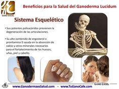 Beneficios del Ganoderma Lucidum en la Salud Ayurveda, Plants, Medicine, Vitamin E, Minerals, Wellness, Fur, Plant, Planets