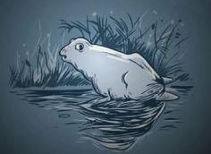 Descubrir el otro animal que acompaña rana