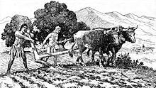 Natives utilize a primitive plow to prepare a field for planting near Mission San Diego de Alcalá.Livestock was raised, not only for the purpose of obtaining meat, but also for wool, leather, and tallow, and for cultivating the land. In 1832, at the height of their prosperity, the missions collectively owned:   151,180 head of cattle;   137,969 sheep;   14,522 horses;   1,575 mules or burros;   1,711 goats; and   1,164 swine.