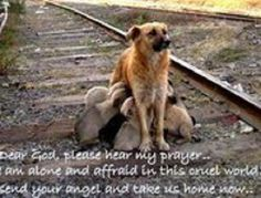 Dear God,    Please hear my prayer...I am alone and afraid in this cruel world.  Send your angel and take us home now.    Prayer of a loving mother with her precious pups, no home, no loving family...nothing.    PLEASE DON'T SHOP!  ADOPT!  Save the lives of these beautiful creatures.  They deserve so very much more!