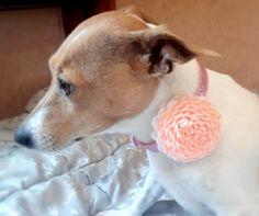 Dog collar flowerDog collarOrange dog collar by AirinFlowers #DogAcccessory #PetAccessory #DogClothes #kanzashi #PetSupplies #CollarFlower