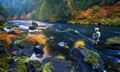 Grasses and sedges flame with color near a fisherman braving the cold waters of the North Umpqua River. Vine Maple and Big Leaf Maples stand out, too. Photo by Ken Morrish. Discover more at traveloregon.com and www.discoveramerica.com
