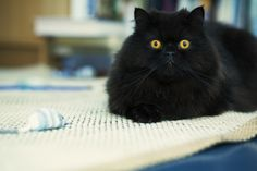 10 adorables chats noirs