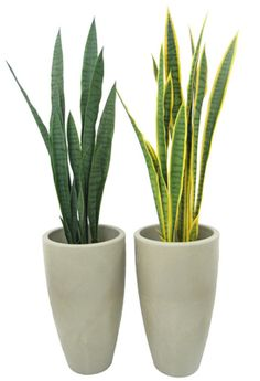 Indoor plants: six resistant species,