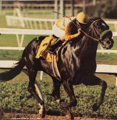 1989 Horse of the Year Sunday Silence makes his triumphant return to racing in the 1990 Californian Stakes Facing only two opponents and sent off as the 1-9 favorite, Sunday Silence proved he was back in action with a willful 3/4 length win over veteran runner Stylish Winner. It was the last win of his career Three weeks later, Sunday Silence came up short by a head to future Horse of the Year Criminal Type in the Hollywood Gold Cup. While in training for the Arlington Challenge Cup at…