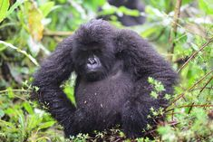 Image Gallery Archive | Page 7 of 10 | Dian Fossey