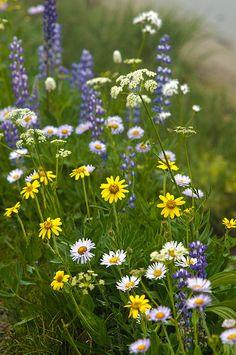 Meadow flowers #topshoppromqueen