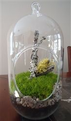 Moss and decorative terrarium