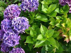 Outdoor Gardens, Plants, Provence, Balcony, Gardening, Gardens, Lawn And Garden, Balconies, Plant