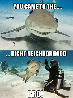 Aww, as dangerous as sharks, I still think it'd be cool to high-five one :)