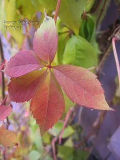 Fairyhungary: Színek, fények, hangulatok Plant Leaves, Plants, Plant, Planets