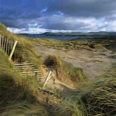 Sand Dunes, Strandhill, County Sligo, Connacht, Repubic of Ireland, Europe Photographic Print by Stuart Black at AllPosters.com