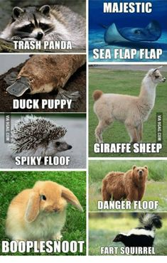 Pandas, Fart, and Sheep: MAJESTIC   TRASH PANDA   SEA FLAP FLAP   DUCK PUPPY   GIRAFFE SHEEP   SPIKY FLOOF   DANGER FLOOF   BOOPLESNOOT   FART SQUIRREL