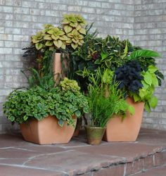 Sheila's containers in Colorado - Fine Gardening