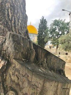 Rare Historical Photos, Dome Of The Rock, Madina, Palestine, Jerusalem, Mosque, Islam, Mountains, Travel