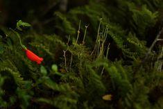 Sendero del Bosque Encantado, Parque Nacional Queulat Chile, Greenery, Strawberry, Fruit, Vegetables, Haunted Forest, National Parks, Scenery, Vegetable Recipes