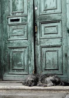 beautiful colours...the grey dog goes excellently with these doors as well :)