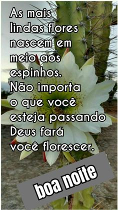 Boa Noite. Facebook, Good Night Msg, Optimism, Life, Flowers