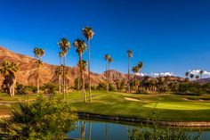 Palm Springs golf course, California   #stock #photography #gettyimages #print #travel  