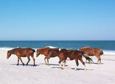 Assateague Island, VA: 37-mile long barrier island located off the eastern coast of Delmarva.The northern two-thirds of the island is in Maryland while the southern third is in Virginia. The Maryland section contains the majority of Assateague Island National Seashore and Assateague State Park. It is best known for its herds of feral horses, pristine beaches, and the Assateague Lighthouse.