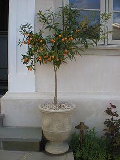 Backyard Garden Landscape, Indoor Garden, Indoor Plants, Outdoor Gardens, Chinoiserie, Kumquat Tree, Art Nouveau, Shabby, Pretty Room