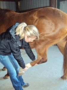 Stretches for Horses. the naturally healthy horse. I always stretch my horses before barrel races and other events like sorting and penning exc. it just seems to make them feel better.