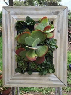 Vertical garden Check For the love of succulents fb page for more  https://www.facebook.com/pages/For-the-Love-of-Succulents-the-living-wall/1603195046581892  Instagram: @FTLO_succulents