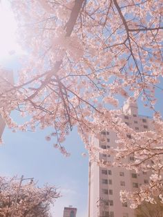 Kirschblüten – Canan 🦄 – Join the world of pin Aesthetic Japan, Korean Aesthetic, Aesthetic Themes, Flower Aesthetic, Blue Aesthetic, Aesthetic Photo, Aesthetic Pictures, Aesthetic Pastel Pink, Japanese Aesthetic
