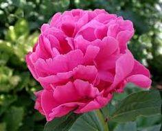 Resultado de imagen para flores color fucsia