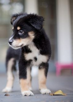 NOVAnimal - Probiotics for animals, specially formulated for kittens and puppies to provide them with good bacteria in their intestines and assist in the control of yeast. An imbalance of bad bacteria in the gut flora can be particularly ailing to young animals during their formative stages.