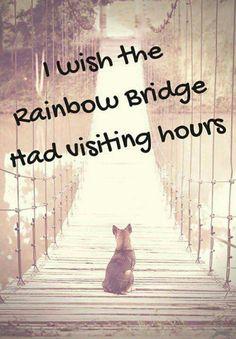 I wish the Rainbow Bridge had visiting hours :' (