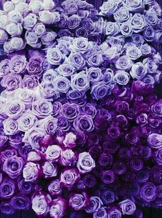 Violet: Pantone colour of 2018 Purple Love, Purple Stuff, Pastel Purple, All Things Purple, Shades Of Purple, Dark Purple, Purple Hues, Purple Ombre, Periwinkle