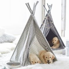 Treat your most beloved companion to a little luxury with this little teepee, made just for your four-legged friend! Made with cotton canvas and a hardwood frame plus a plush pillow, it's long-lasting, comfy and too cute!