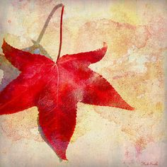 Red Autumn by Heidi Smith