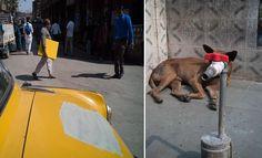 29 incríveis coincidências de fotos tiradas nas ruas pelo mundo >> https://www.tediado.com.br/03/29-incriveis-coincidencias-de-fotos-tiradas-nas-ruas-pelo-mundo/