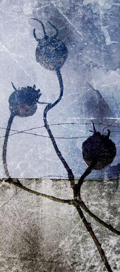 Päivi Hintsanen: From the Garden XII, 2011