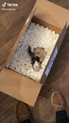 Baby Ferrets, Funny Ferrets, Pet Ferret, Cute Animal Videos, Cute Animal Pictures, Cute Little Animals, Cute Funny Animals, Silly Dogs, Funny Animal Memes