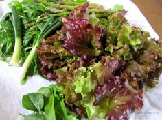 new red fire lettuce - Google Search