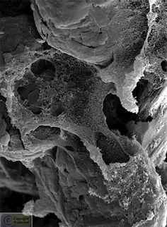**NanoGhost** Fine Art Print by Cris Orfescu, 2010 - . Structure Of Matter, Scanning Electron Microscope, Natural Structures, Science Art, New Art, Fine Art Prints, Ultra Premium, Sculpture, Luster